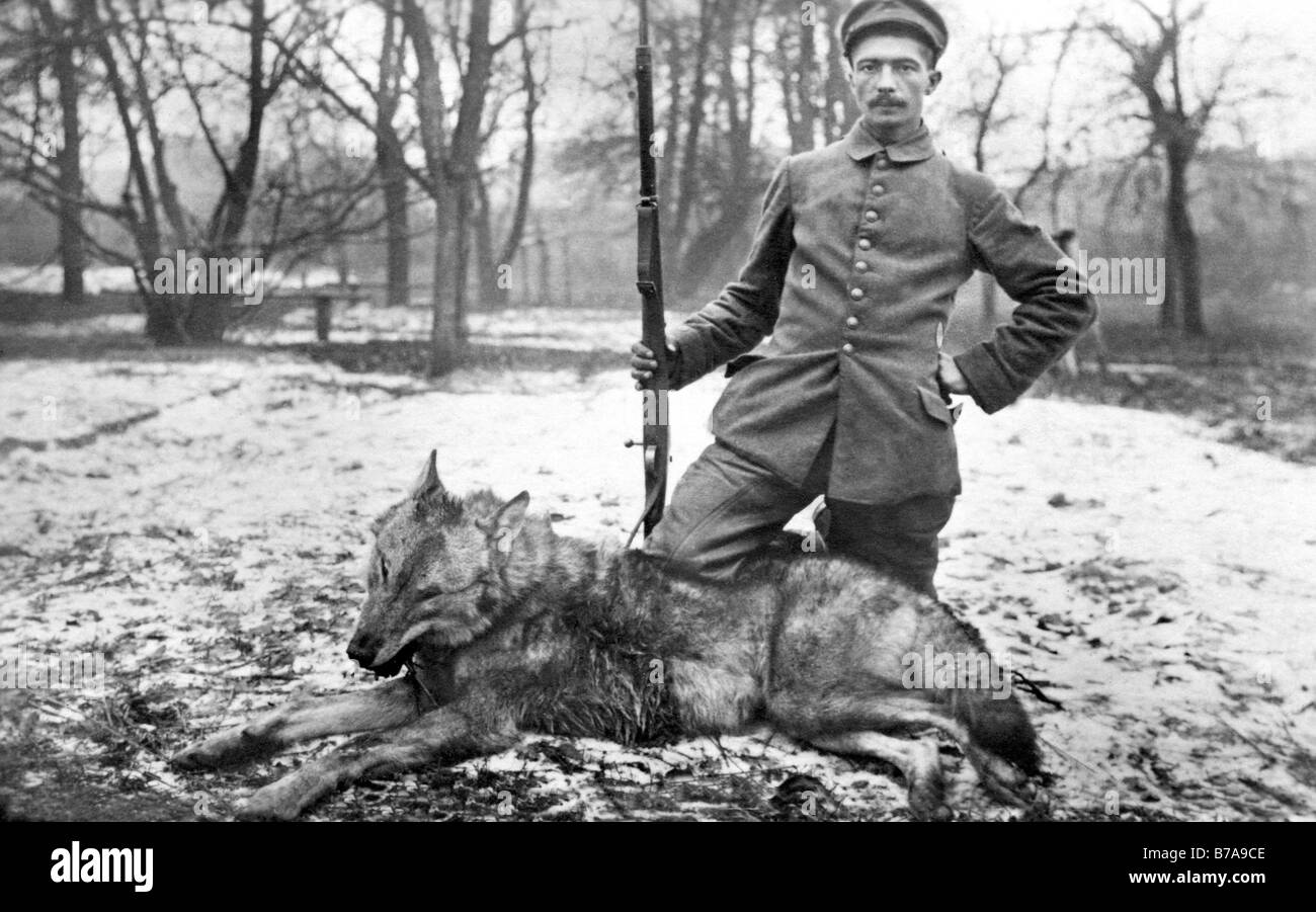 Historic photo, German soldier shooting down a wolf, ca. 1915 in Russia Stock Photo