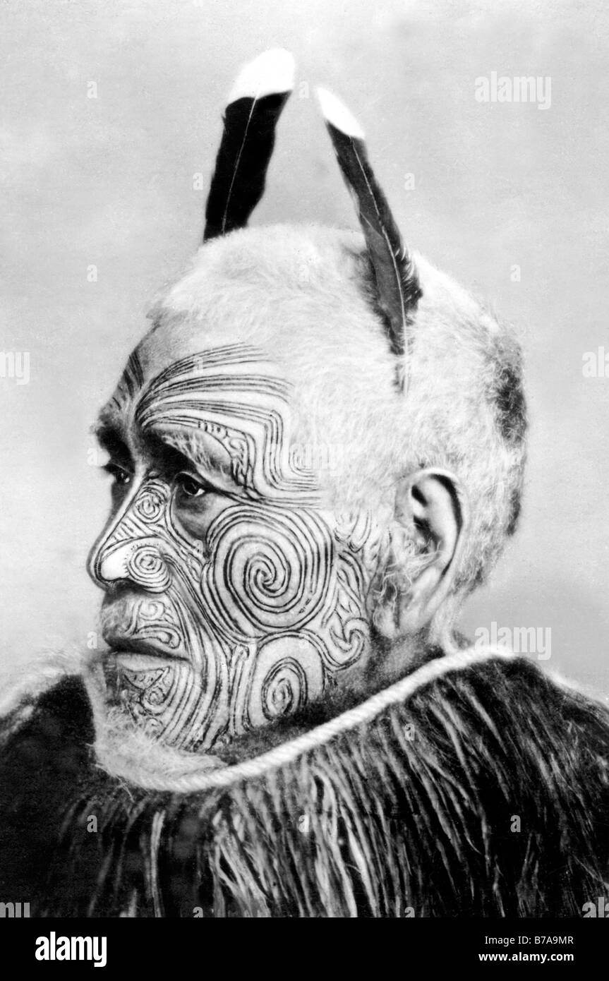 Historic photo, tattooed tribal chief, Maori, ca. 1900 Stock Photo