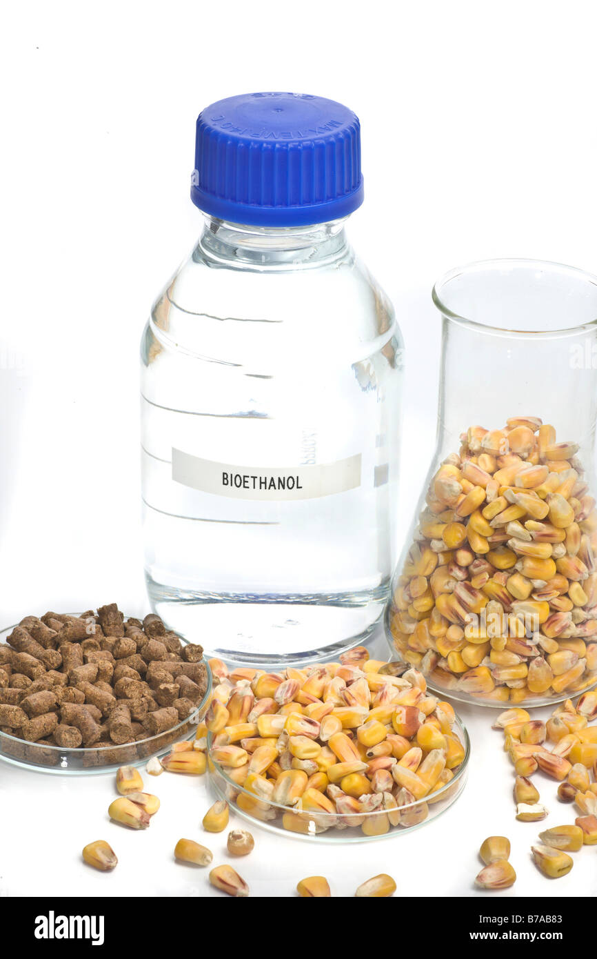 Bioethanol and foodstuff from bioethanol plant with unprocessed maize - Stock Image