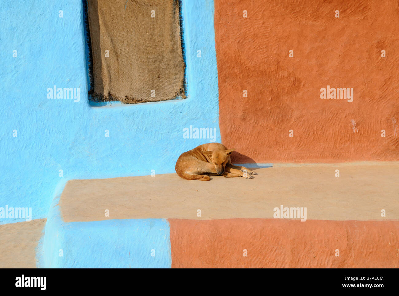 A brown dog lying on a smooth clay terrace sleeps in the morning sun. Behind him are terracotta and sky blue painted - Stock Image
