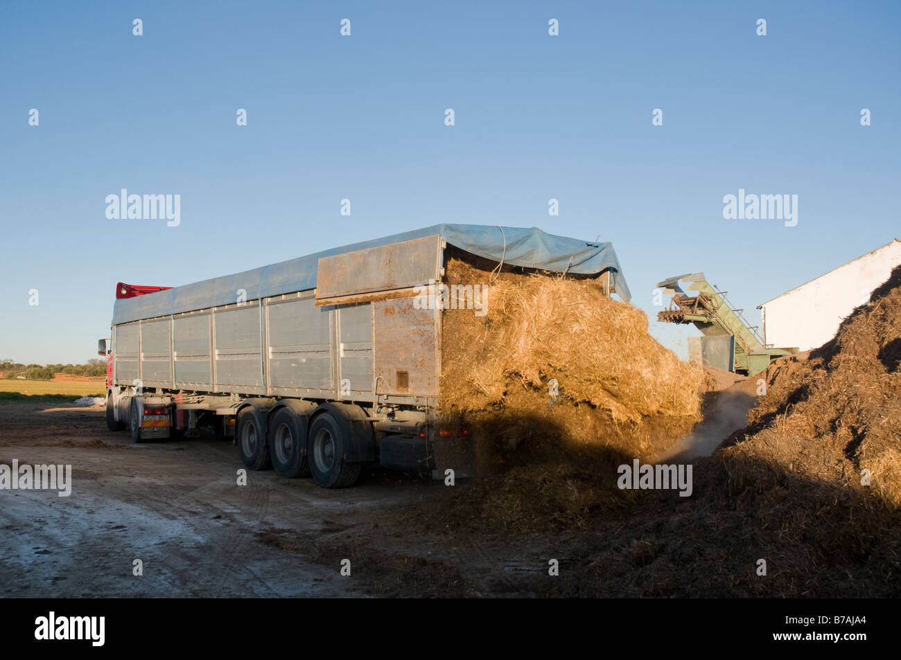truck unloading chicken manure to be used in compost production - Stock Image