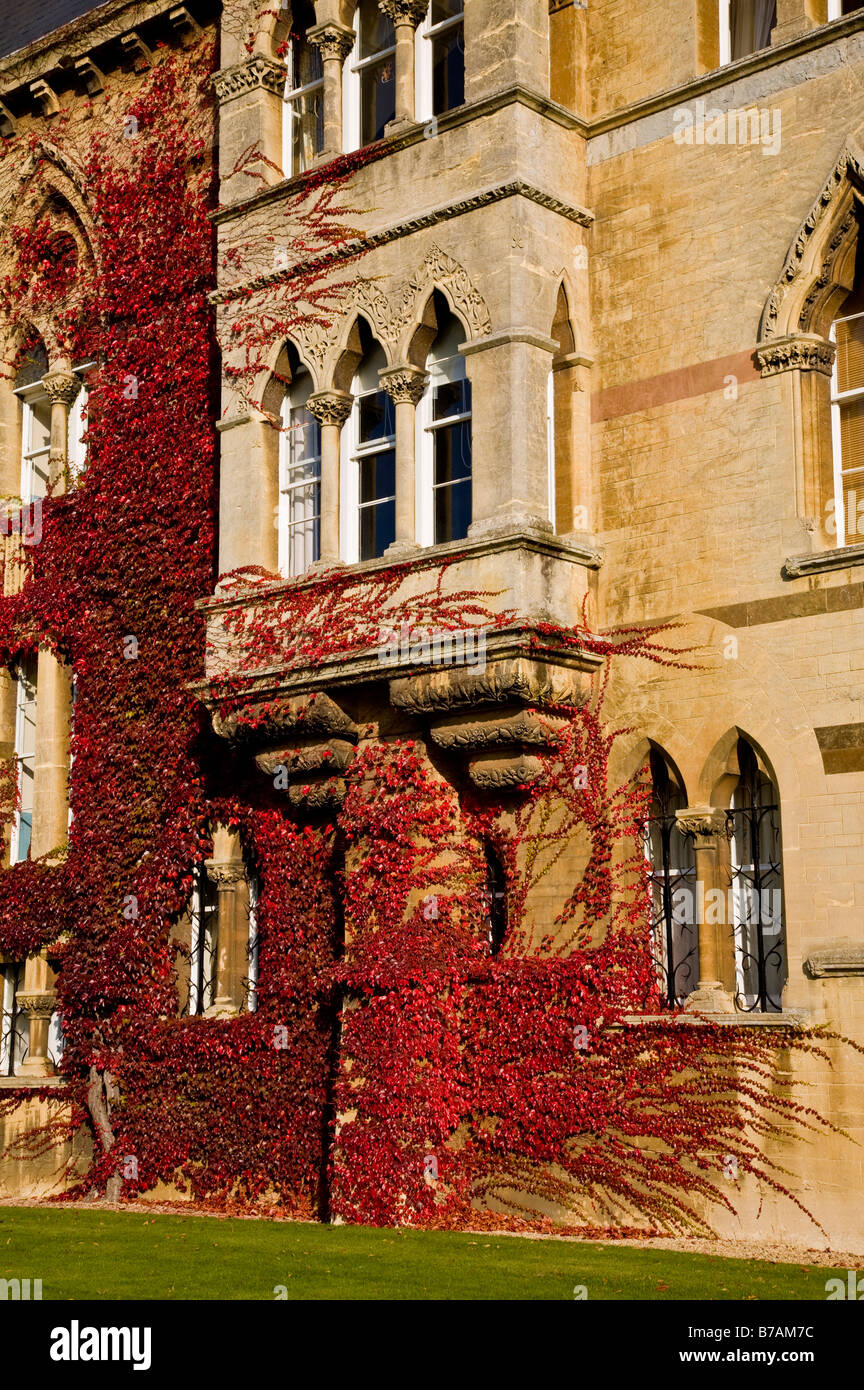 Russian vine on the walls of Christ College, Oxford, England, UK. - Stock Image