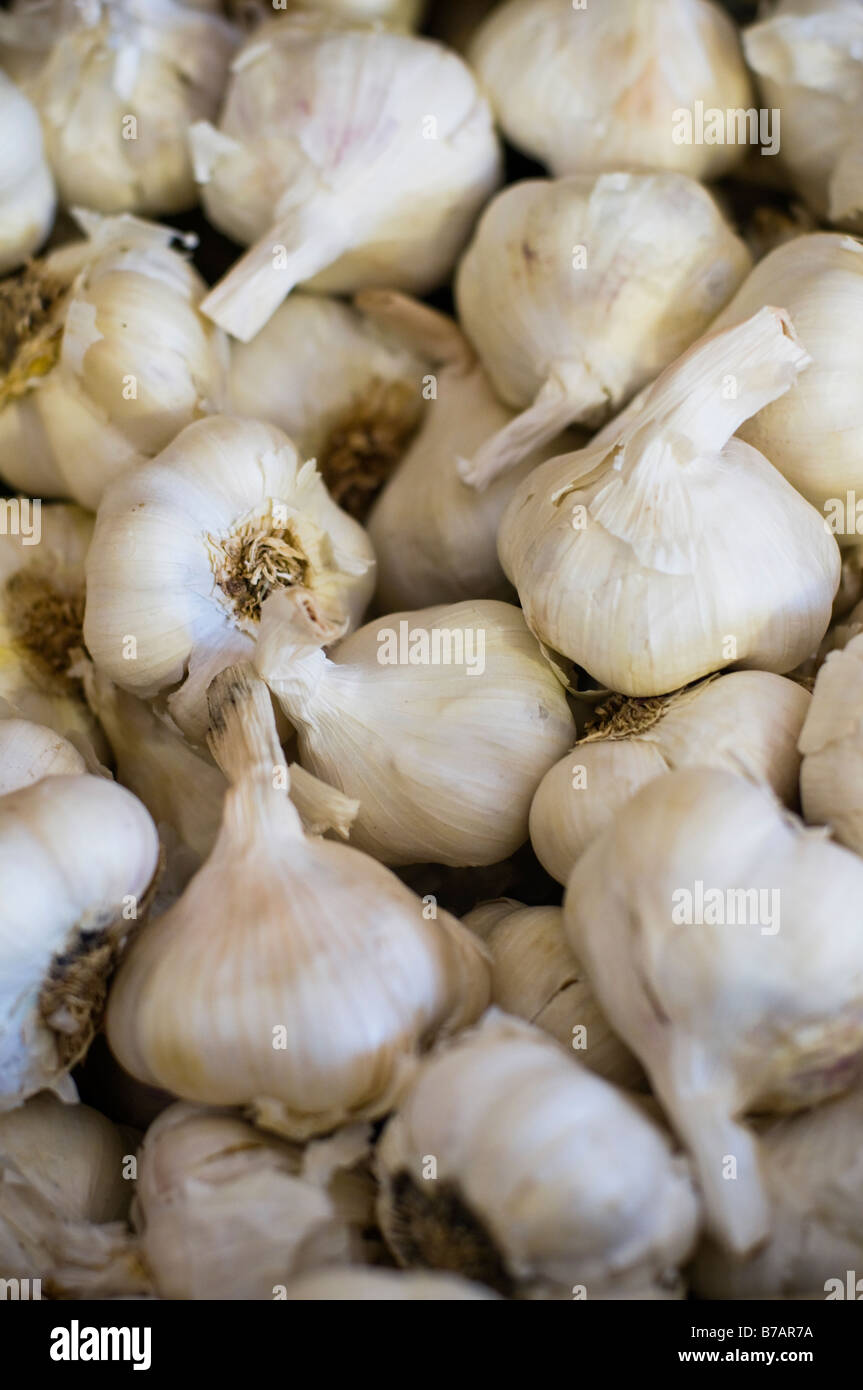 Loose Garlic - Stock Image