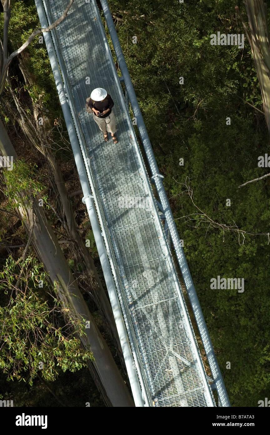 The Otway Fly elevated tree top walk , Otway Ranges , Victoria , Australia - Stock Image