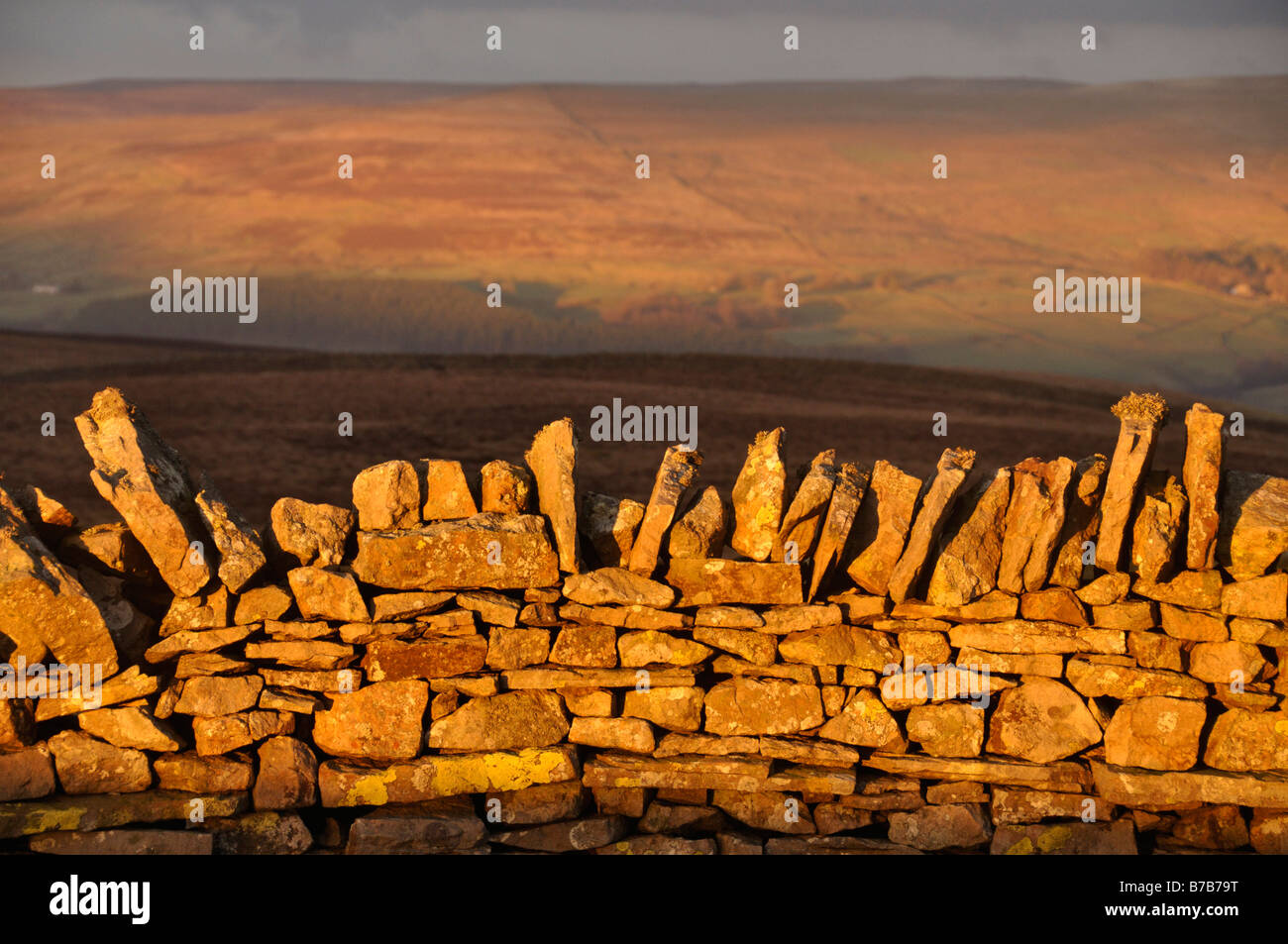 Evening light on stone wall Park fell North Pennines - Stock Image