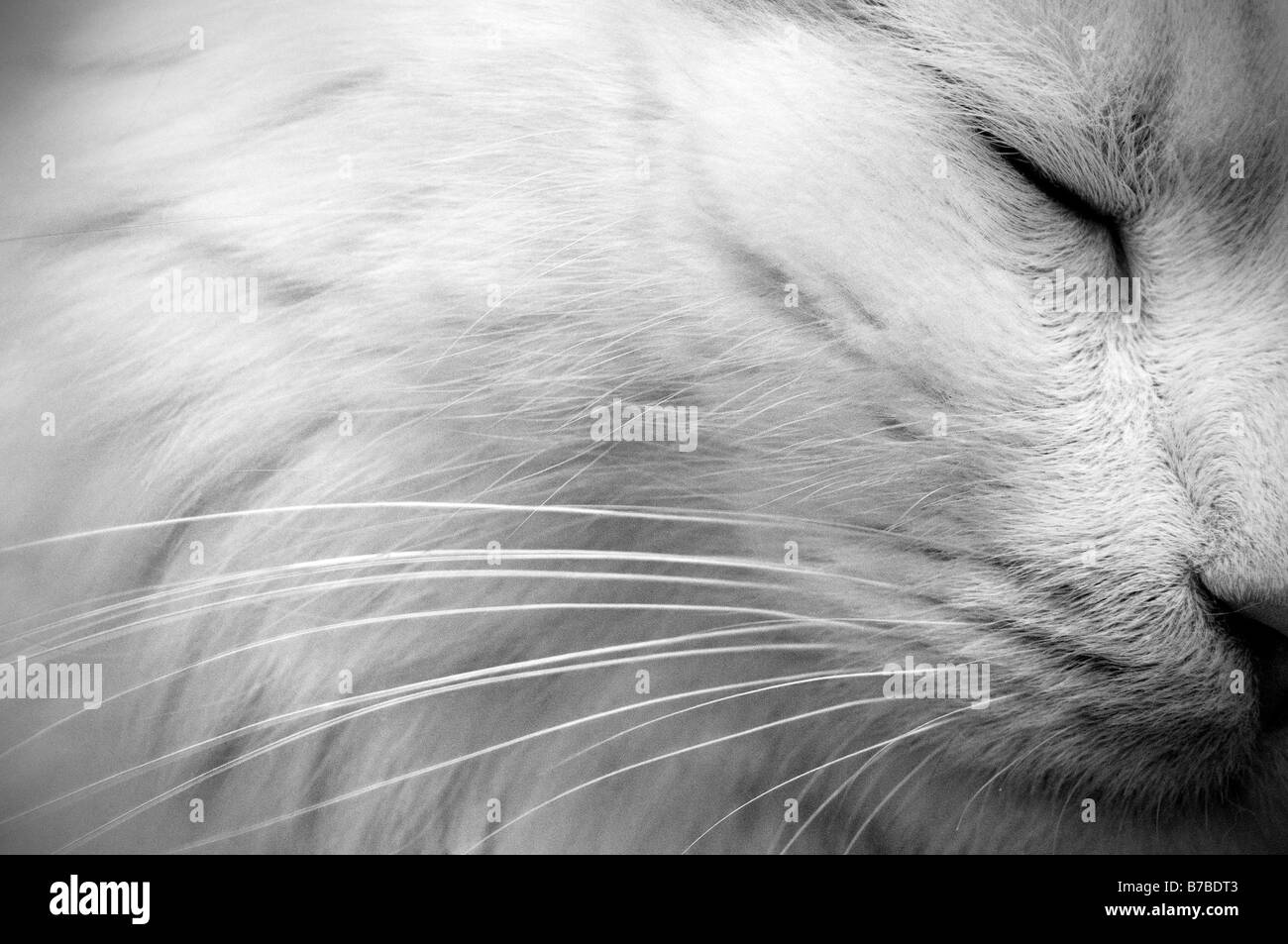 White cat. Detail - Stock Image
