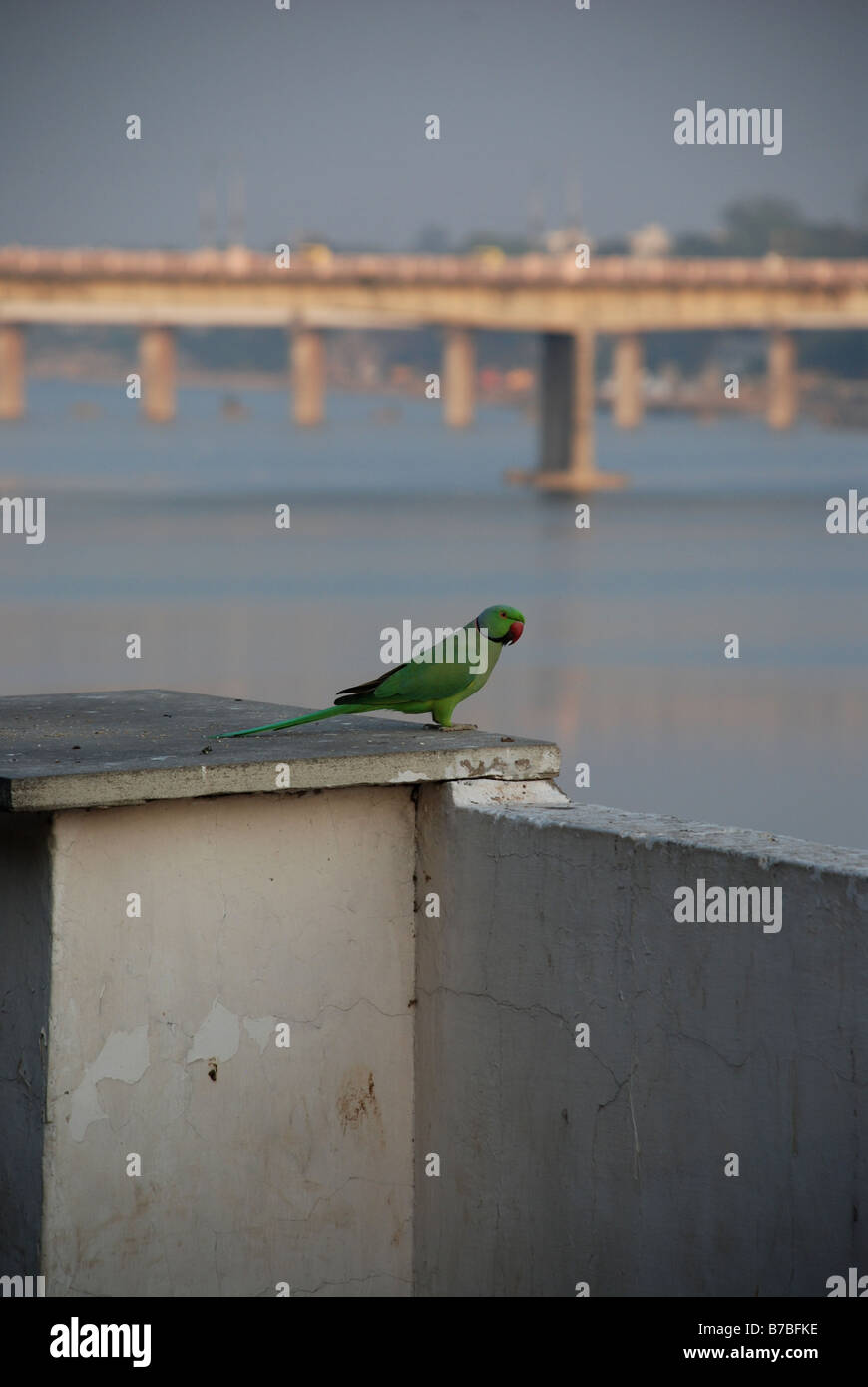Perroquet with the Gandhi Bridge in the distance, Ahmedabad, India. - Stock Image