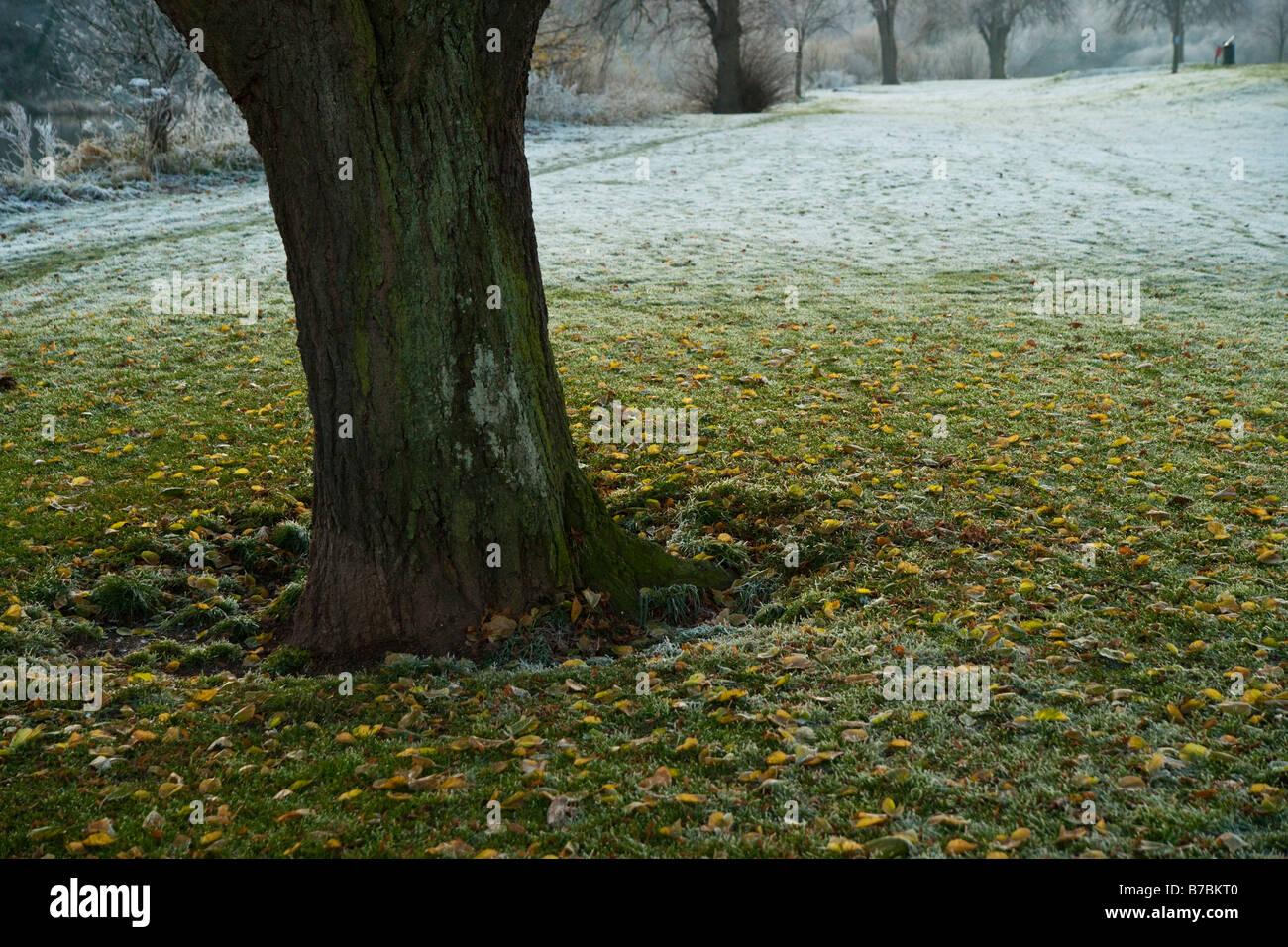 Scotland in winter detail of frosty fields Kelso Stock Photo