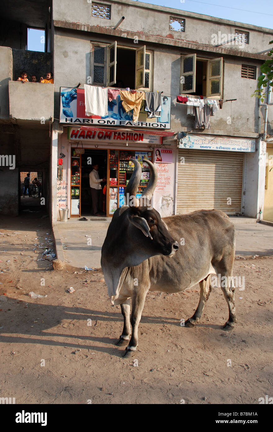 Close-up of cow in Ahmedabad, India. - Stock Image