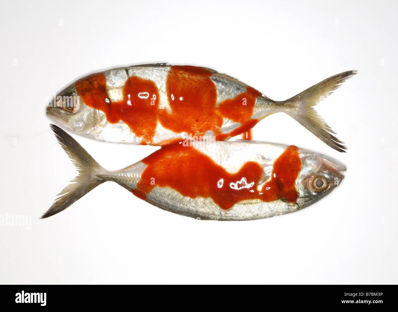 Flat Head Fish Stock Photos & Flat Head Fish Stock Images - Alamy
