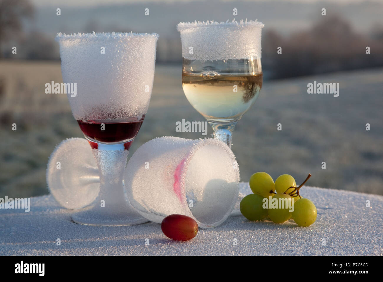 Morning-after-night-before frosted and broken wine glass party remains in frozen countryside UK - Stock Image