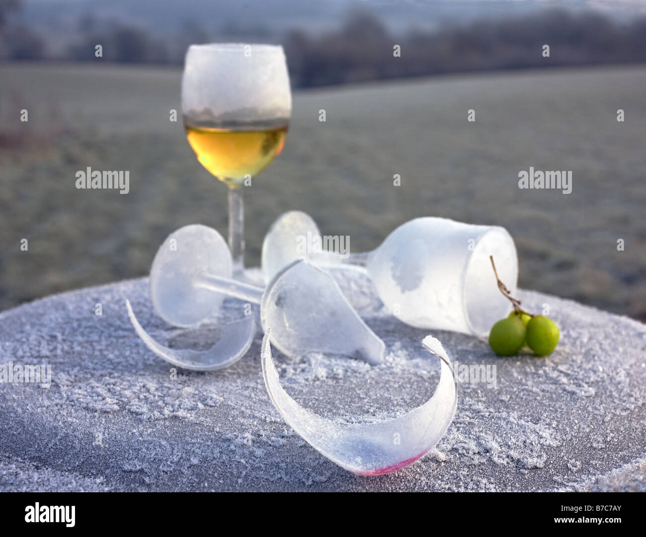Morning-after-night-before frosted and broken wine glass party remains in frozen countryside UK Stock Photo