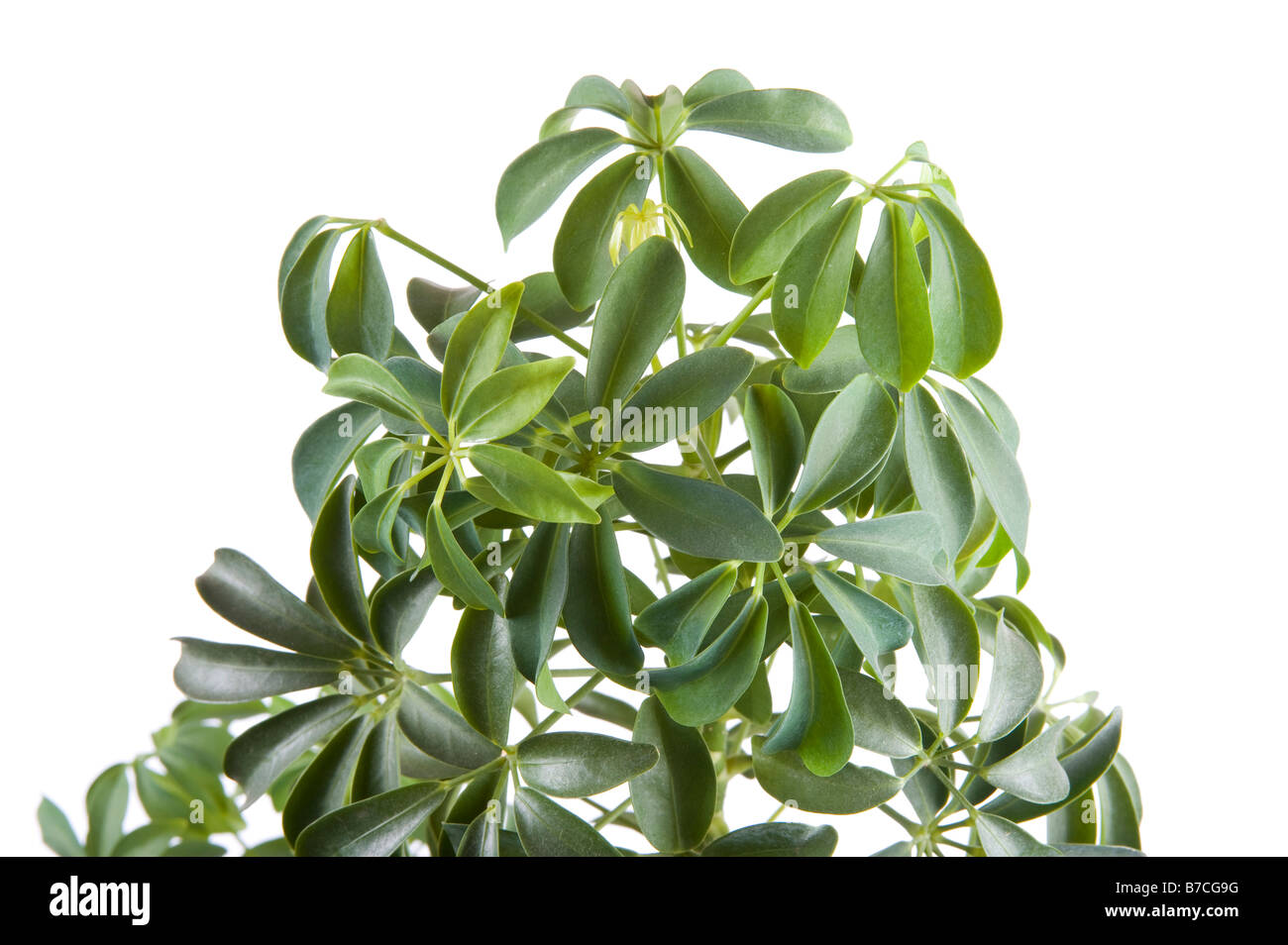 Object On White Flower Indoor Plants Closeup Stock Photo 21789196