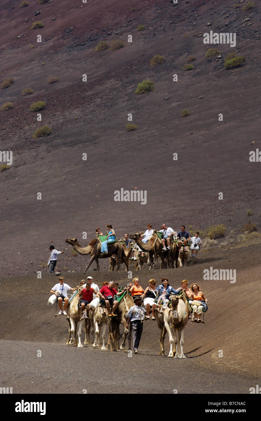 camel riding in Timanfya national park, Canary, Lanzarote - Stock Image
