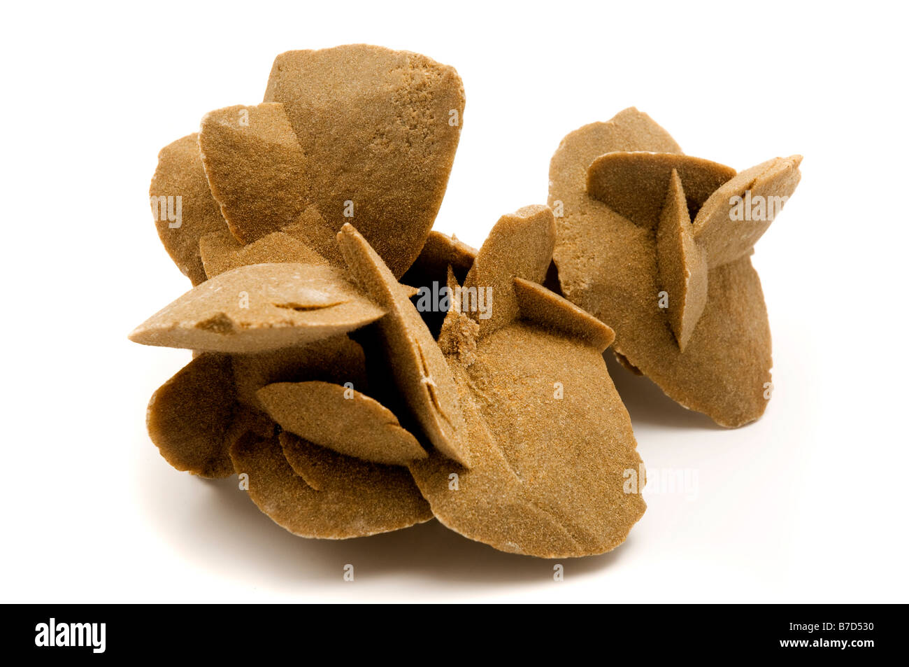 Desert Rose Rosette formations of the minerals gypsum and barite with poikilotopic sand inclusions on a white background - Stock Image
