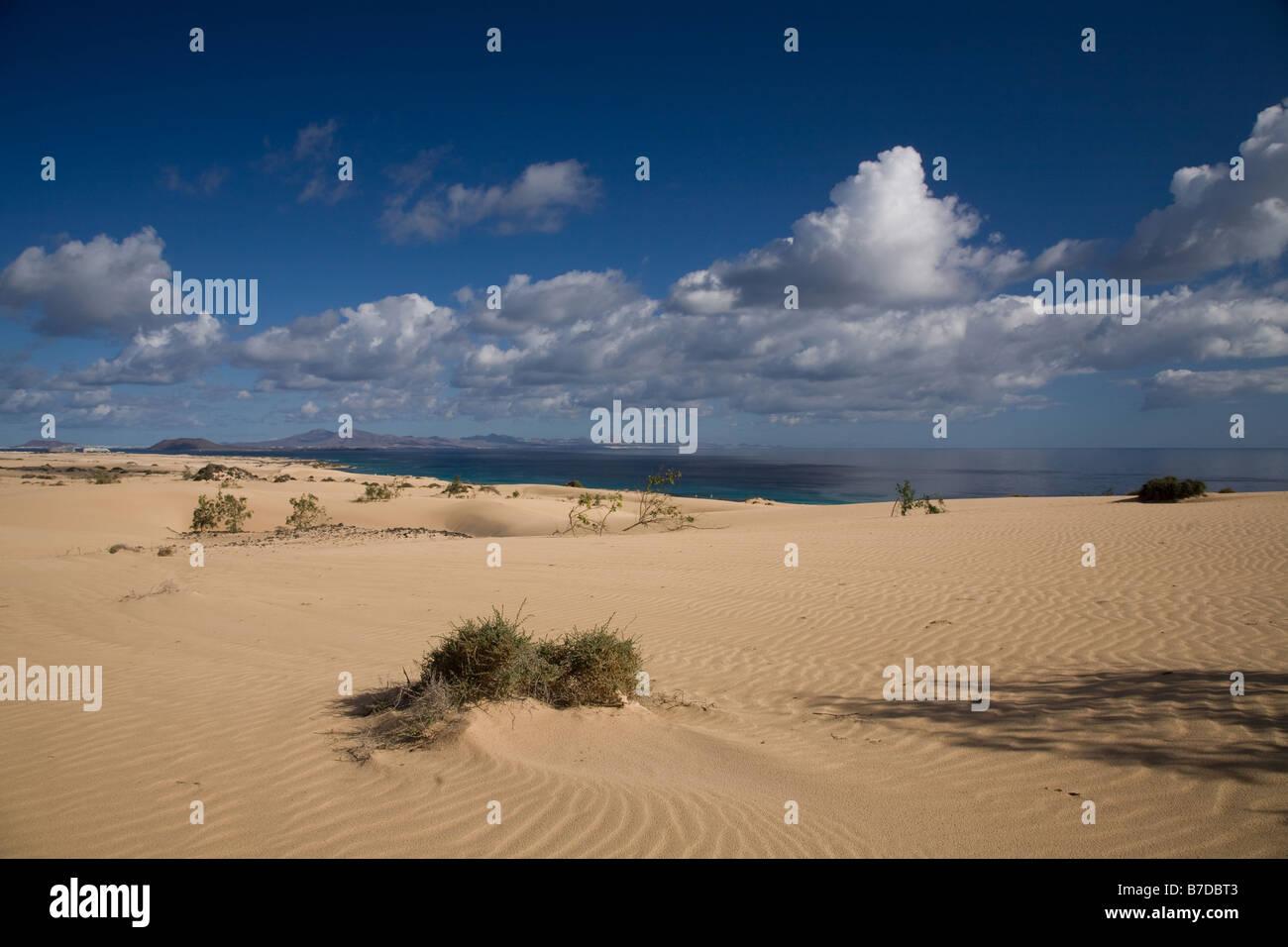 Sahara like desert on Fuerteventura. Dunas de Corralejo. Sand dunes in a volcanic landscape next to the sea - Stock Image