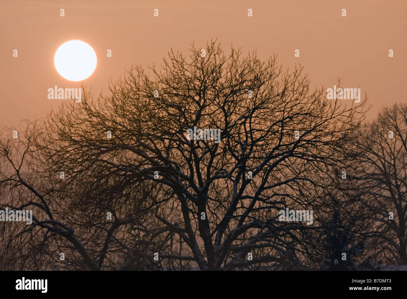 Weak evening, winter sun over the tree. - Stock Image