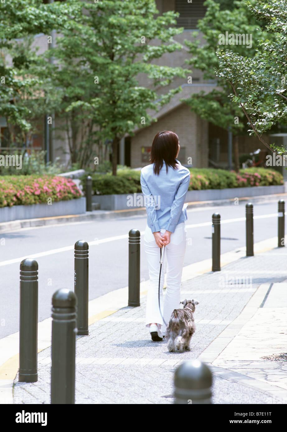 Woman taking dog for walk - Stock Image