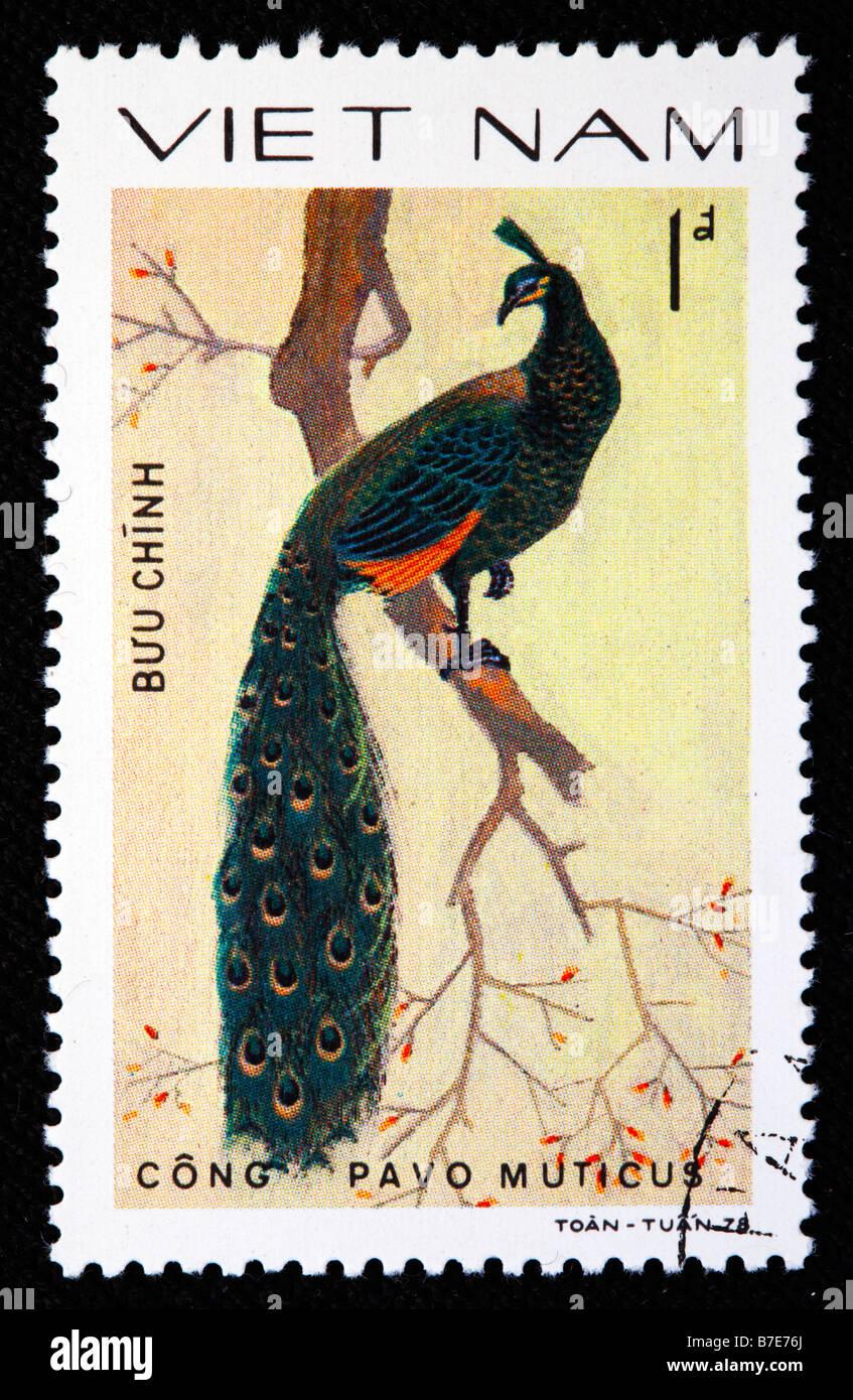 Green Peafowl, Pavo muticus, postage stamp, Vietnam, 1978 - Stock Image