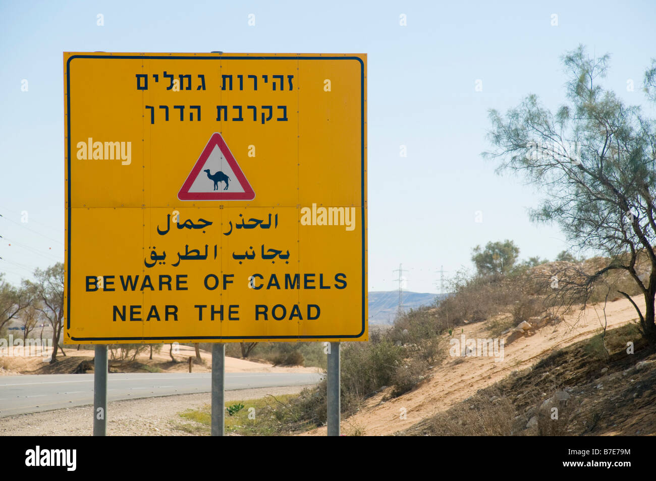 Israel Negev A large yellow warning sign Beware of Camels near the road Stock Photo