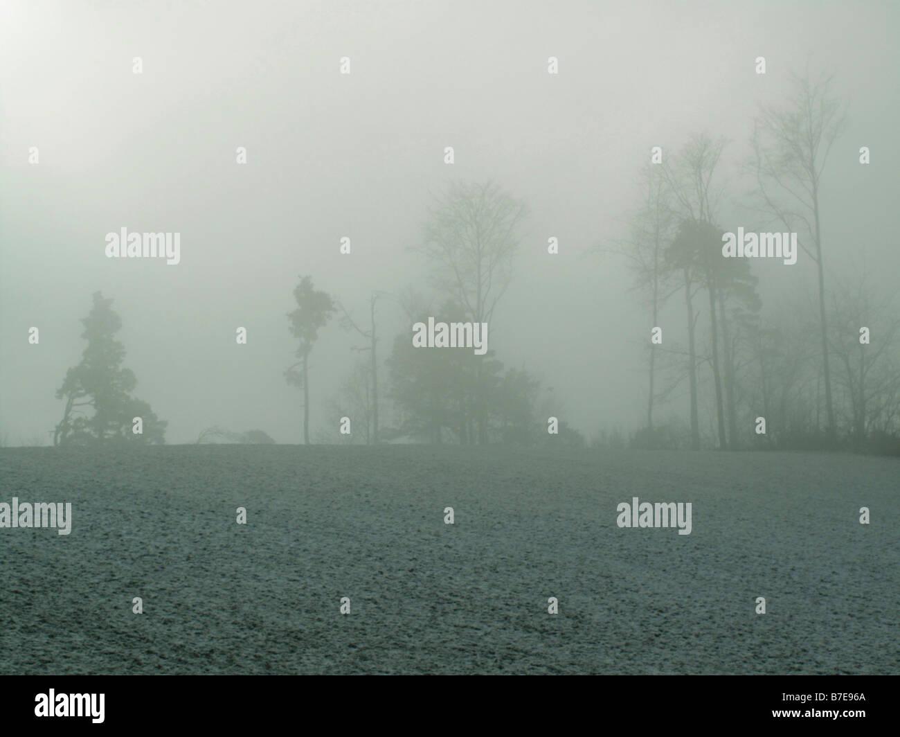 foggy trees canton of zurich switzerland - Stock Image