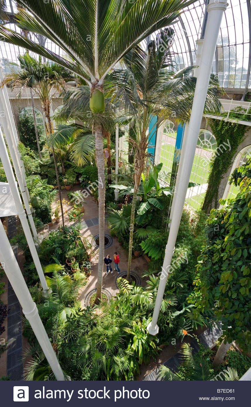 A COUPLE IN THE PALM HOUSE IN THE ROYAL BOTANIC GARDEN EDINBURGH - Stock Image