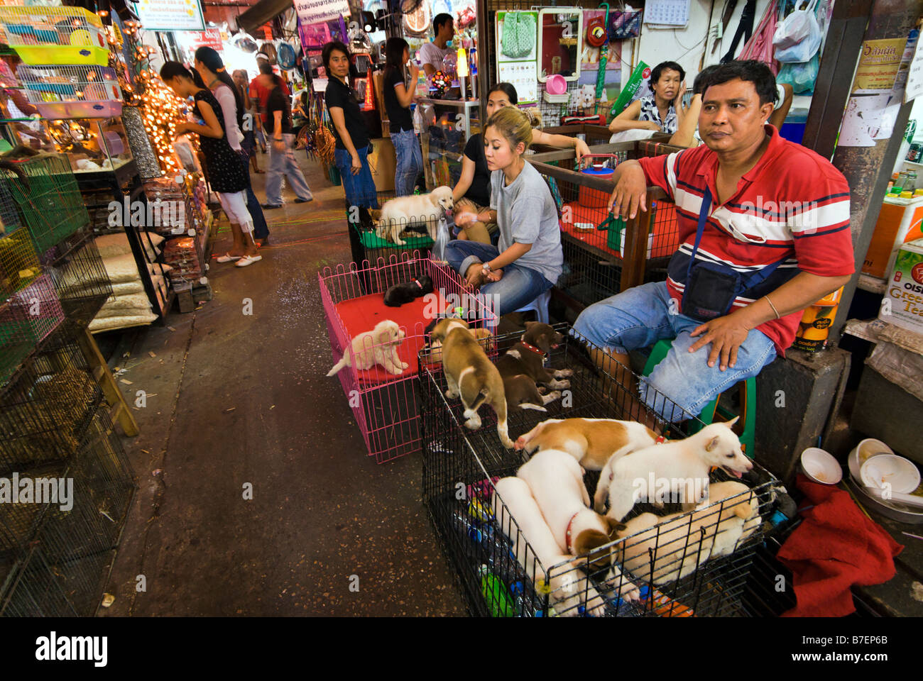 People selling pet puppies at Chatuchak Weekend Market in Bangkok Thailand - Stock Image