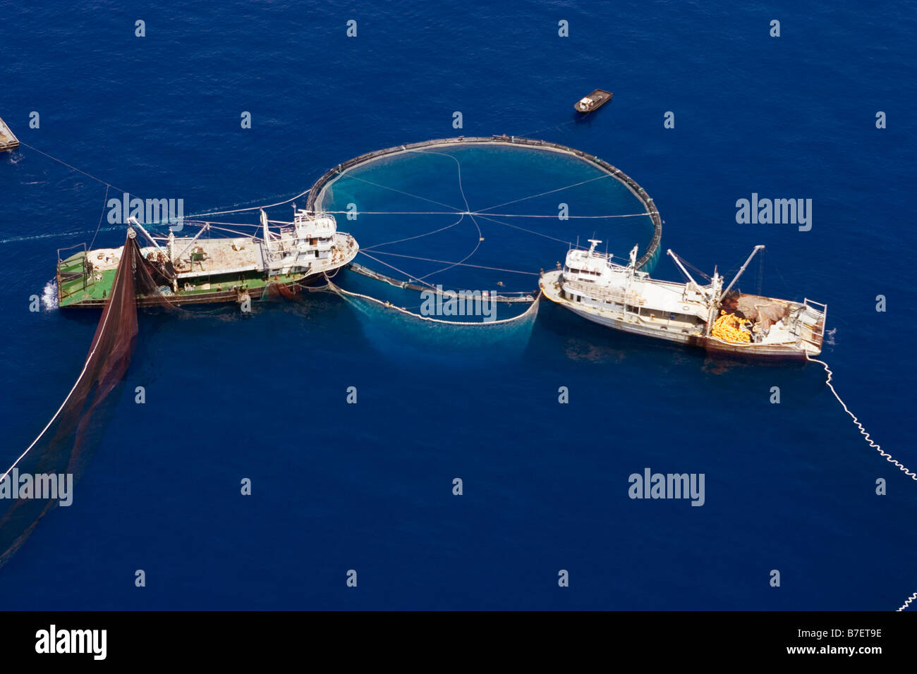 Turkish tuna fleet purse seine fishing for bluefin tuna for Purse seine fishing