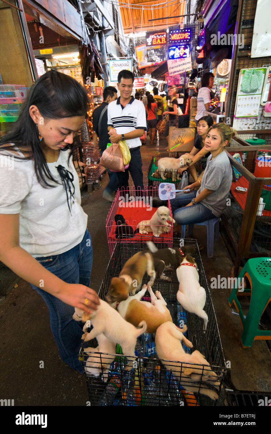 People selling pet puppies at on a stall at Chatuchak Weekend Market in Bangkok Thailand - Stock Image