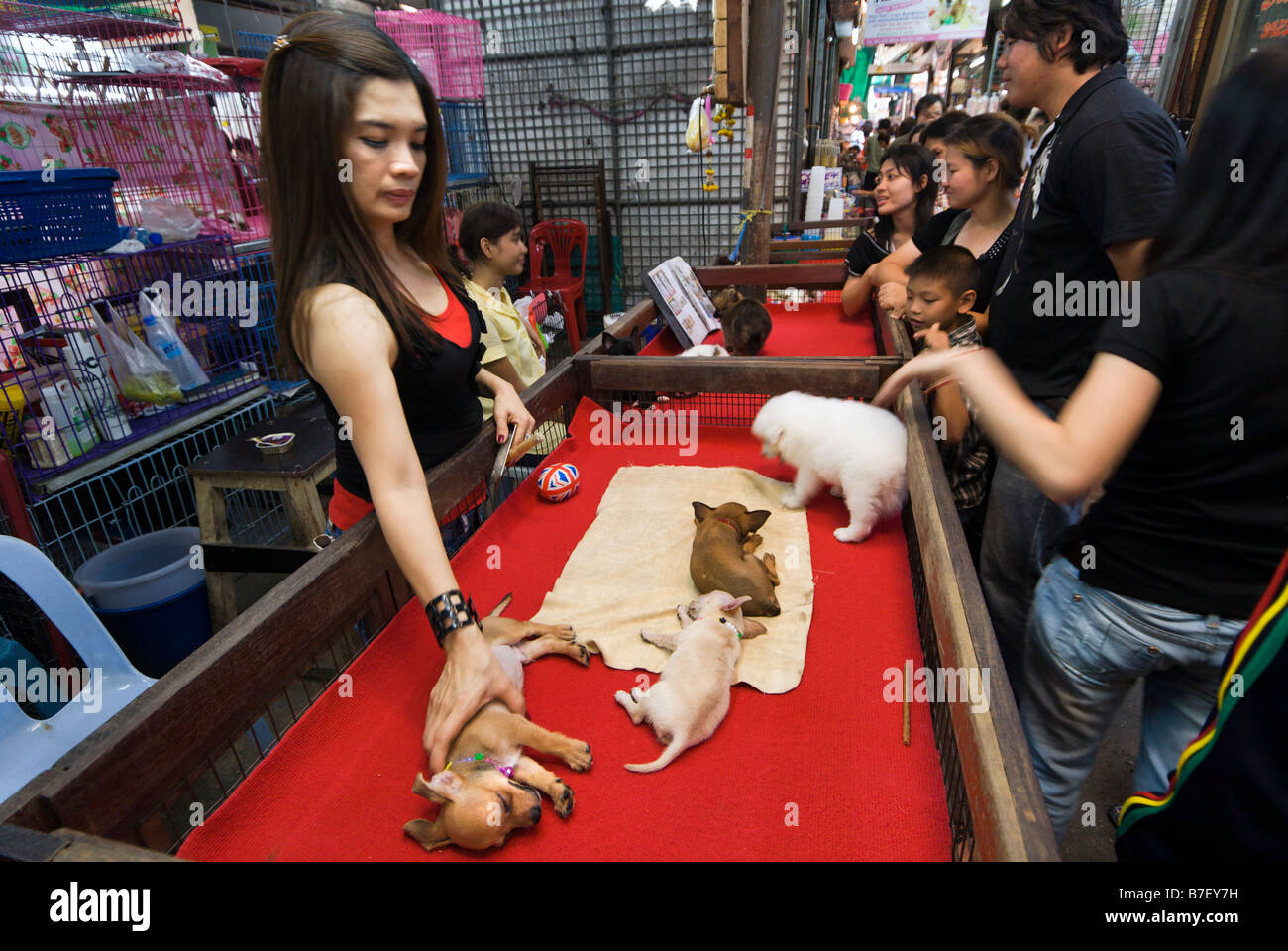 Woman selling pet puppies on a stall at Chatuchak Weekend Market in Bangkok Thailand - Stock Image