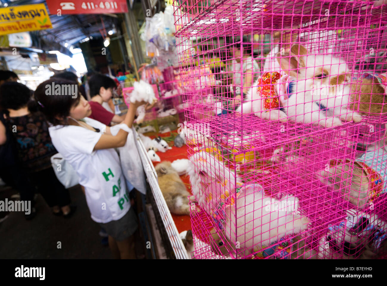 Caged rabbits wearing dresses for sale in a pet shop stall at Chatuchak Weekend Market in Bangkok Thailand - Stock Image