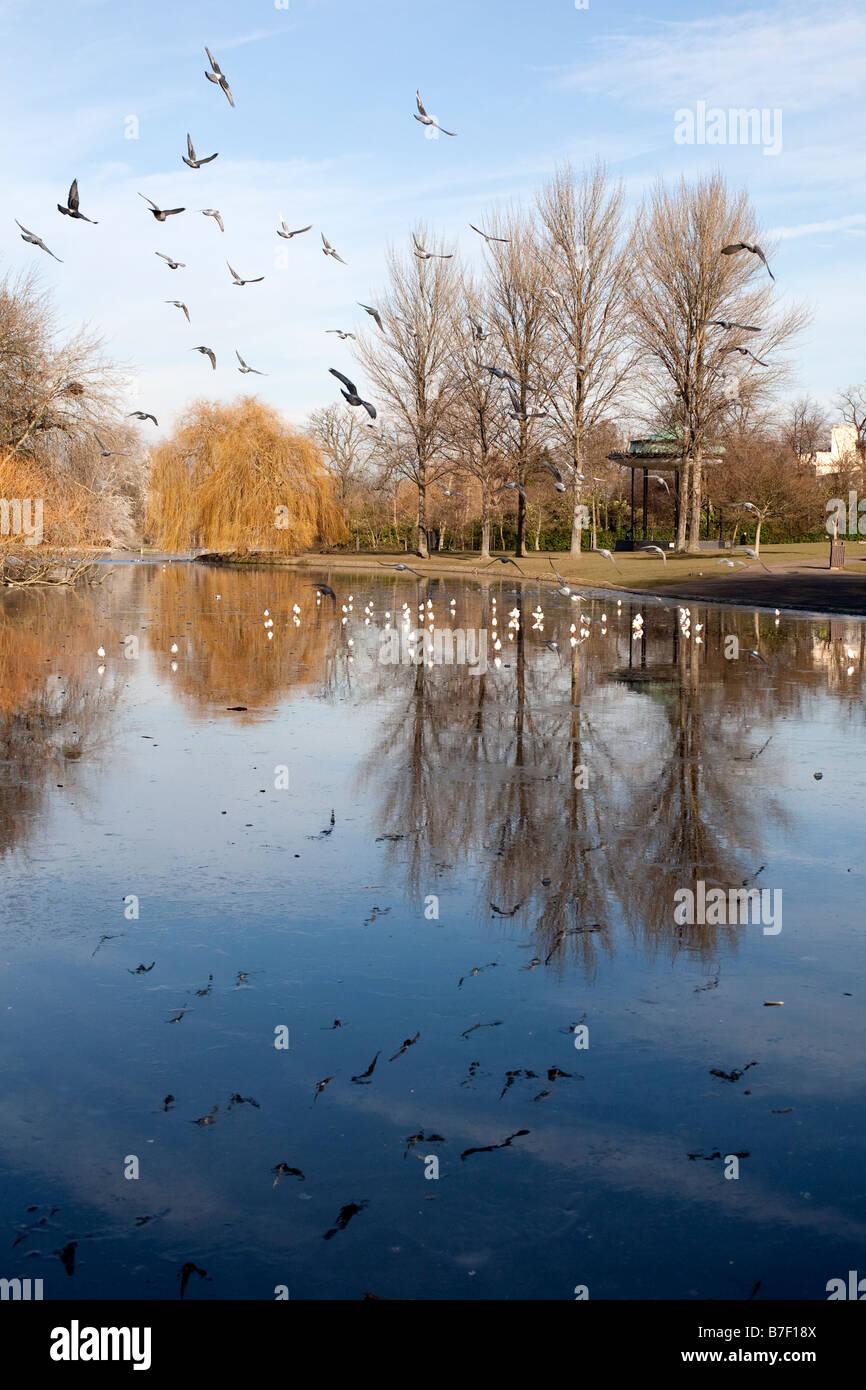 Birds flying over frozen lake in winter sunshine. Regents Park, London, England, UK - Stock Image
