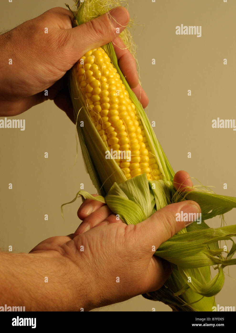 Stripping the outer leaves from a corn cob. - Stock Image