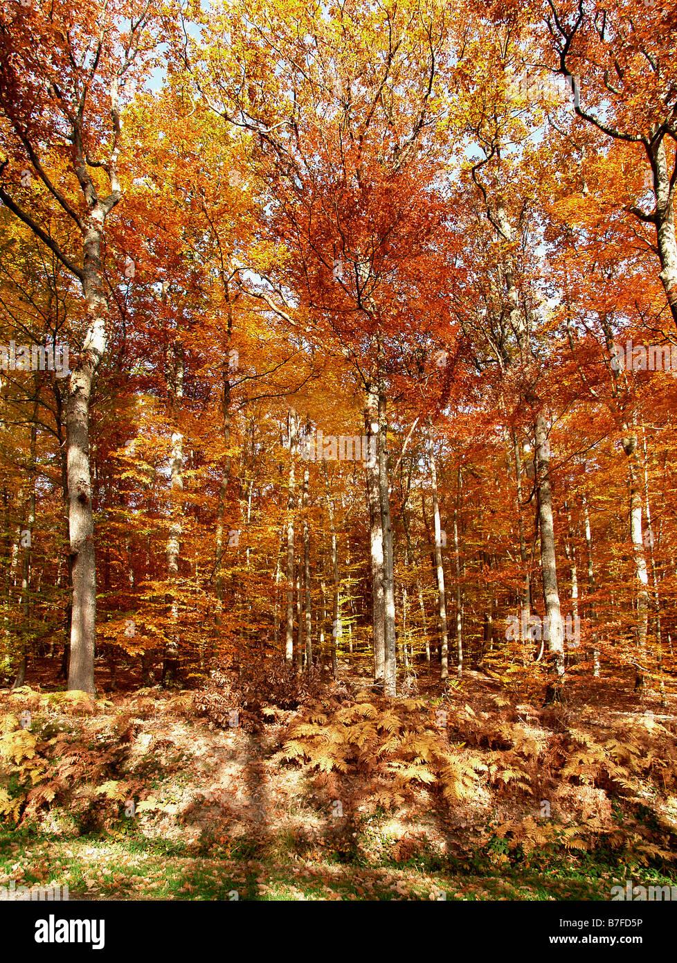 bord de la Route dans la forêt de Tronçais en automne Allier 03 Autumn Auvergne Bad season Bad seasons - Stock Image