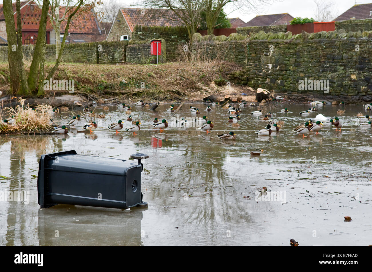 Refuse collection wheelie bin full of rubbish thats been dumped on a frozen local duck pond by hooligans and left - Stock Image