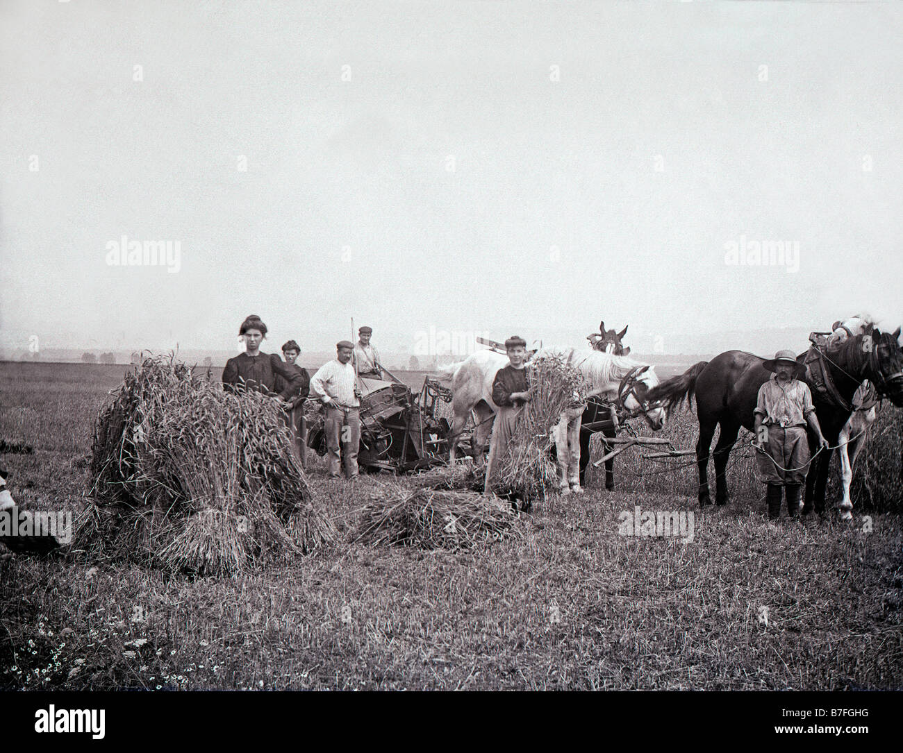 les foins en france vers 1900 Batteuse thresher agricultural machinery agriculture farming haystack working workers - Stock Image