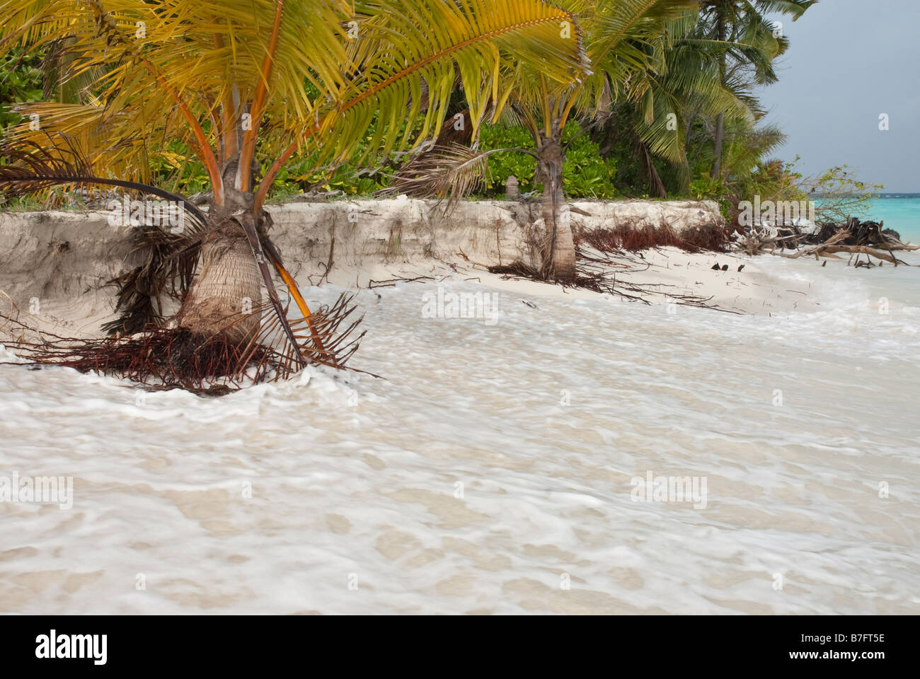 Tropical plants falling into the ocean as a tropical island is eroded away by the sea. - Stock Image