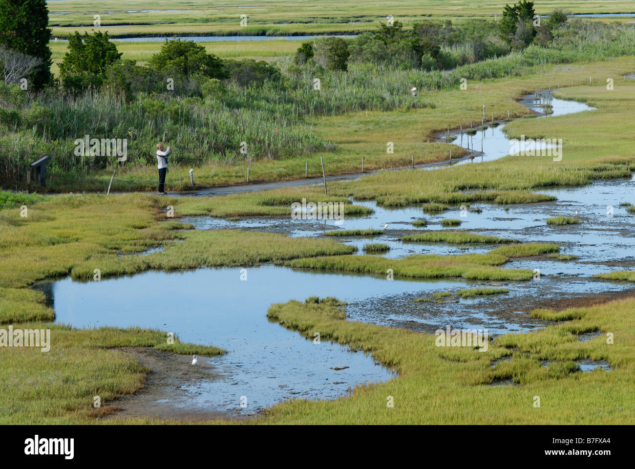 Person observing a wetland salt marsh ecosystem, Wetlands Institute, 'Stone Harbor', NJ - Stock Image