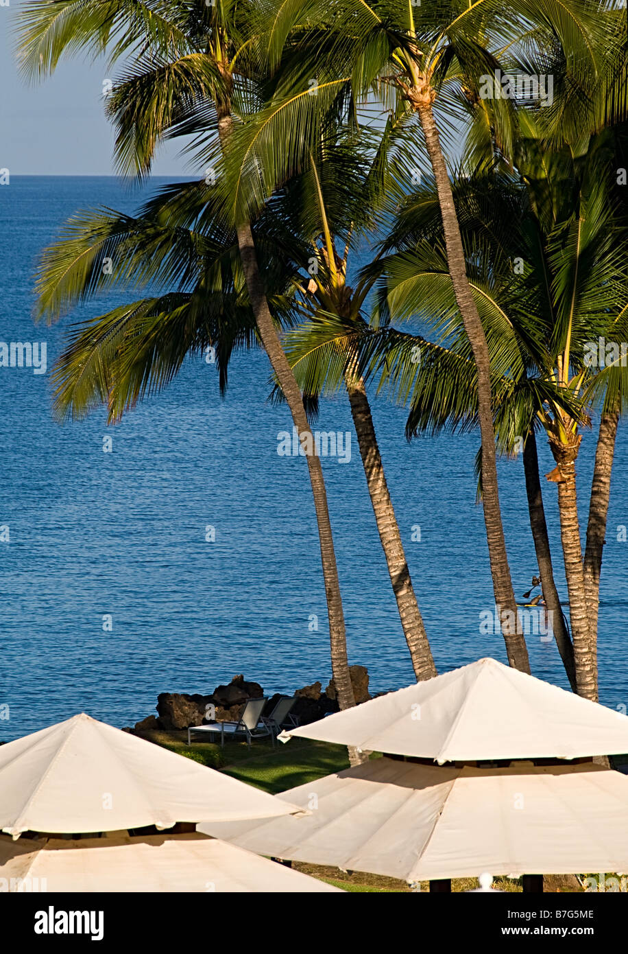 Cabana Roofs With Tall Green Palm Trees And Blue Water Of Pacific - Palm-tree-furniture-from-pacific-green