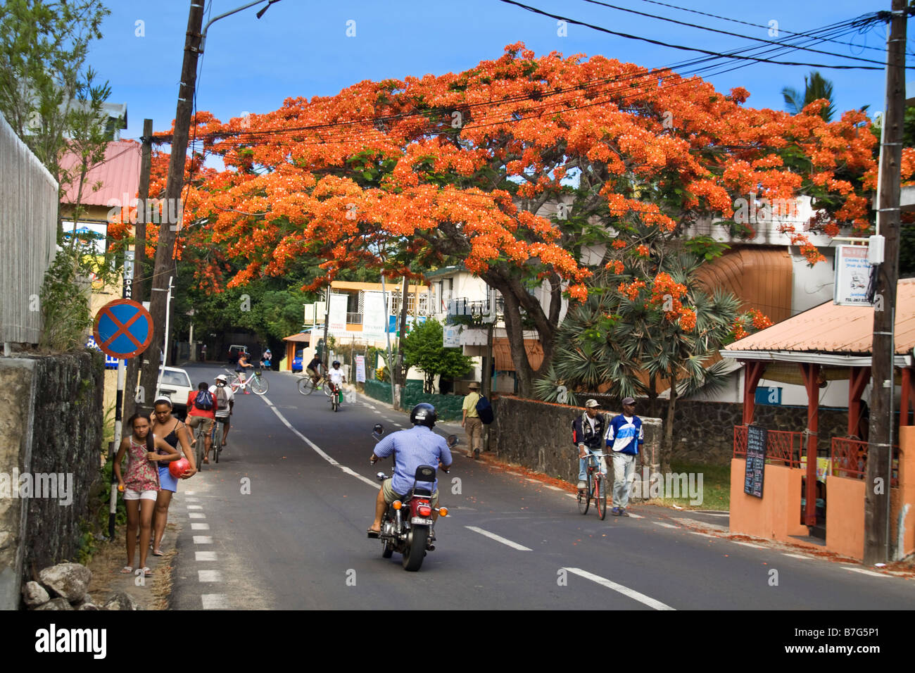 Grand Baie Main road Flame Tree people Mauritius Africa - Stock Image