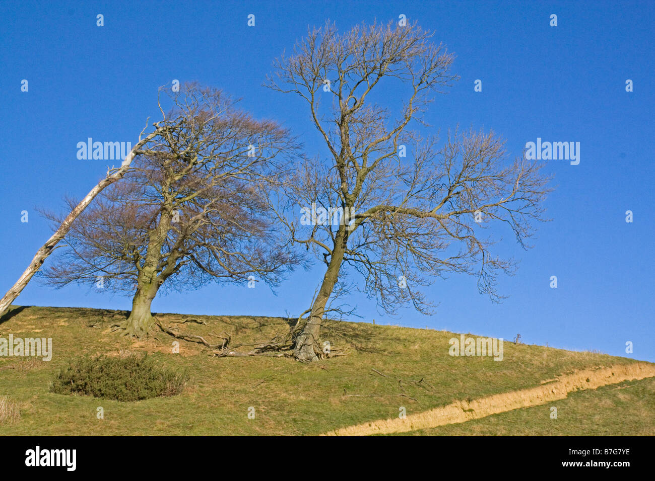 View of trees on Meon Hill Cotswold UK - Stock Image