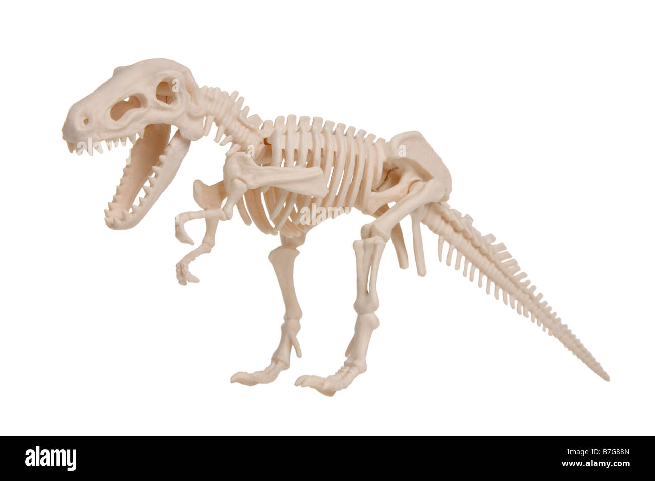 Dinosaur skeleton model cut out on white background - Stock Image