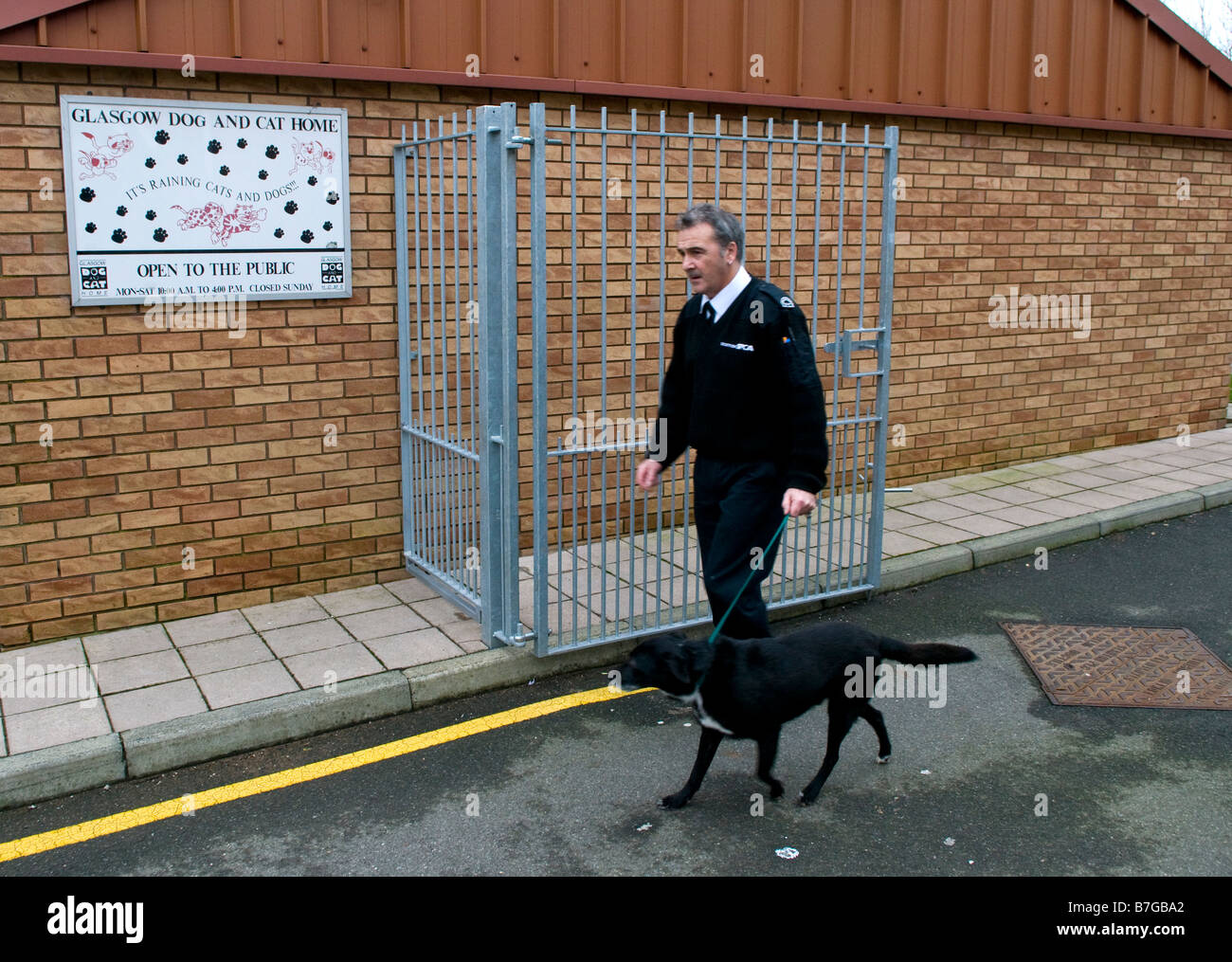 Scottish SPCA officer walking a dog in the Dog and Cat Home Glasgow - Stock Image