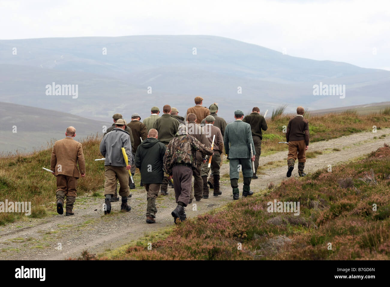 Grouse beaters with flags on a grouse shoot on moors in Scotland, UK - Stock Image