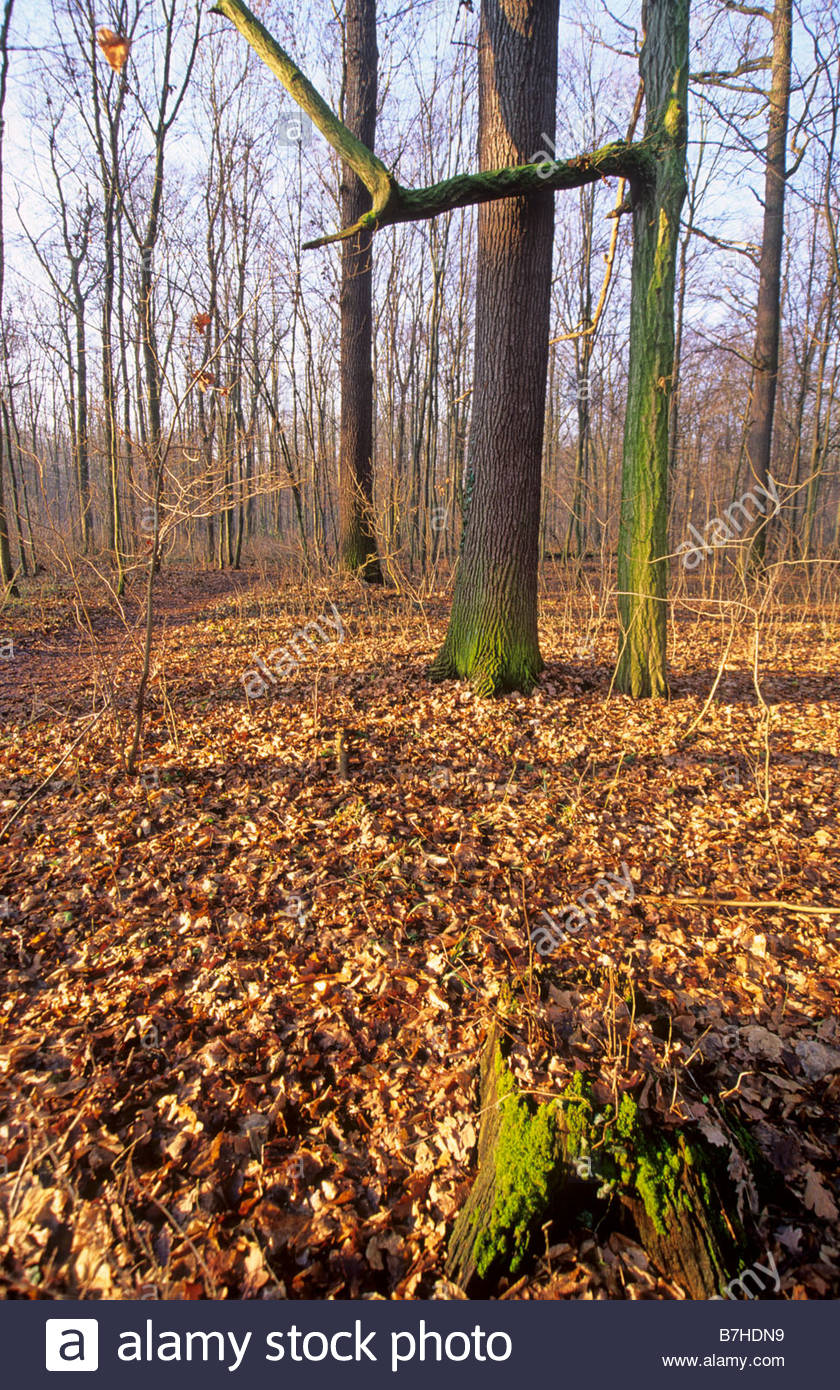 sunny early winter forest Stock Photo