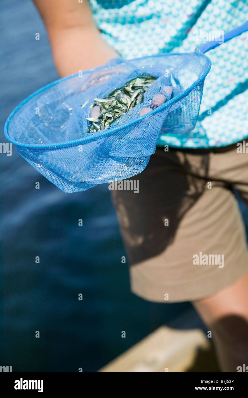 14 Year Old Girl Catching Minnows. Victoria, BC. - Stock Image