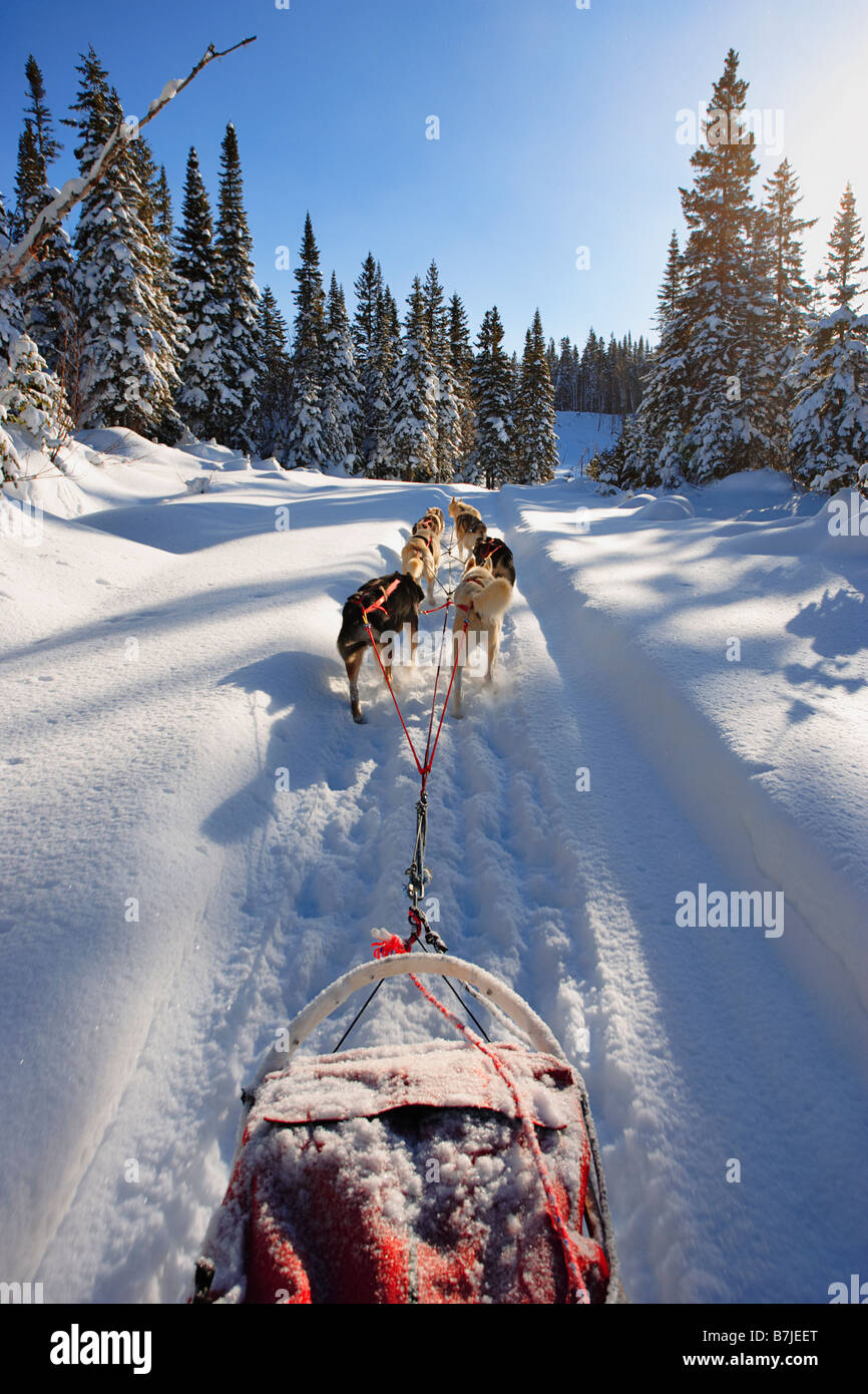 View of Dog Sled in action, Marsoui, Gaspesie, Quebec Stock Photo