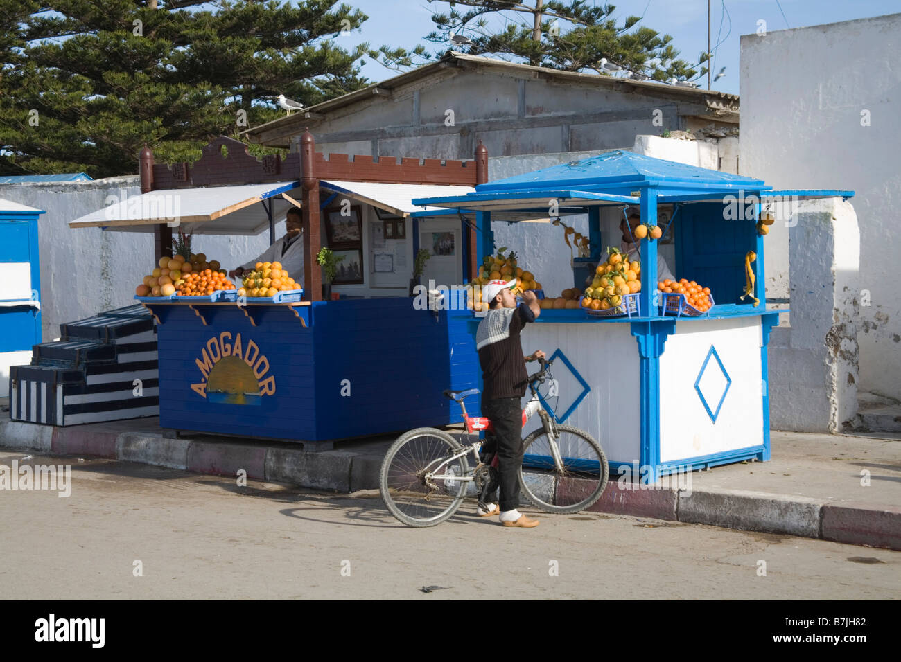 Essaouira Morocco North Africa December A cyclist stopped at a stall for drink of a glass of freshly squeezed orange - Stock Image