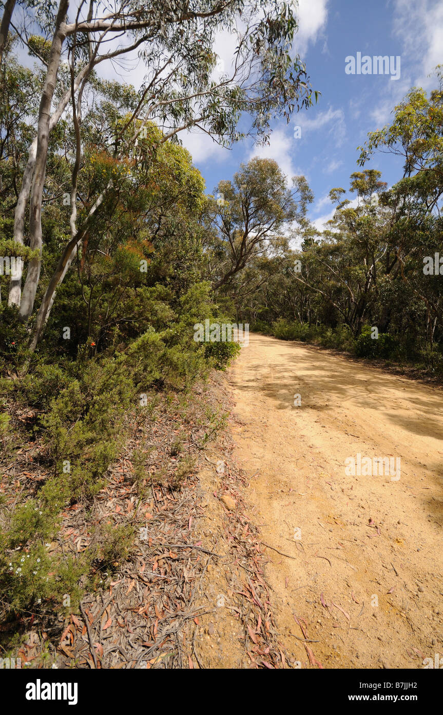 tableland road empty dirt road Road Blue Mountains New south Wales Australia - Stock Image