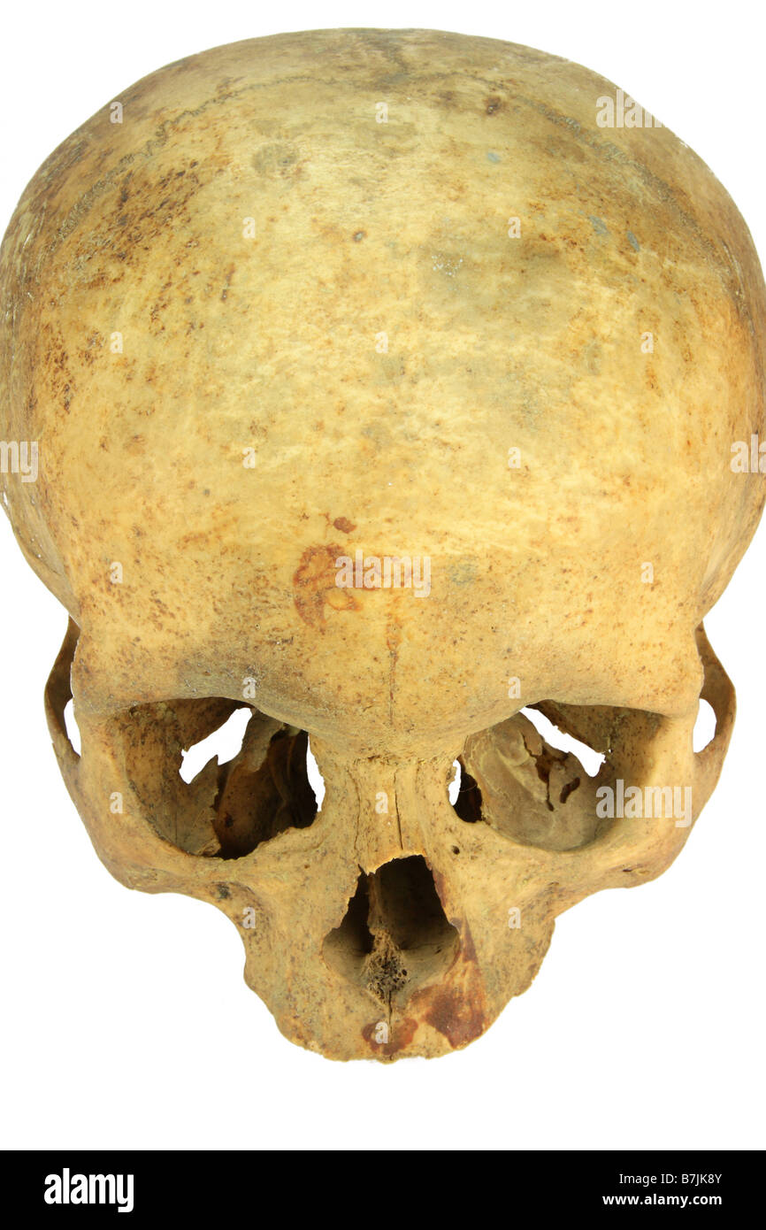 a skull of an female person isolated over white - Stock Image